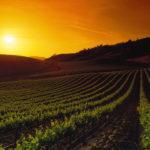 Mendel Malbec wijnen | De top uit Argentinië