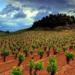 Witte wijnen uit Rueda | NIUS Verdejo Sauvignon blanc